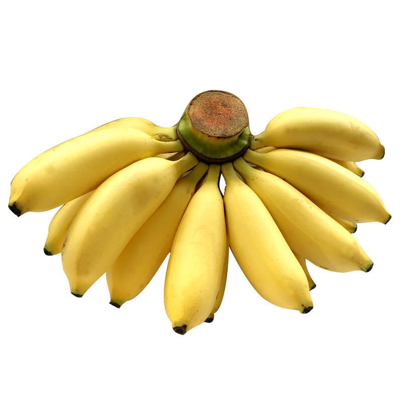 小米蕉鸡蕉4kg皇帝蕉鲜香蕉新鲜水果